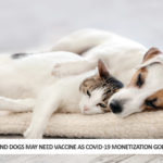 Cats And Dogs May Need Vaccine As COVID-19 Monetization Goes Into Overdrive