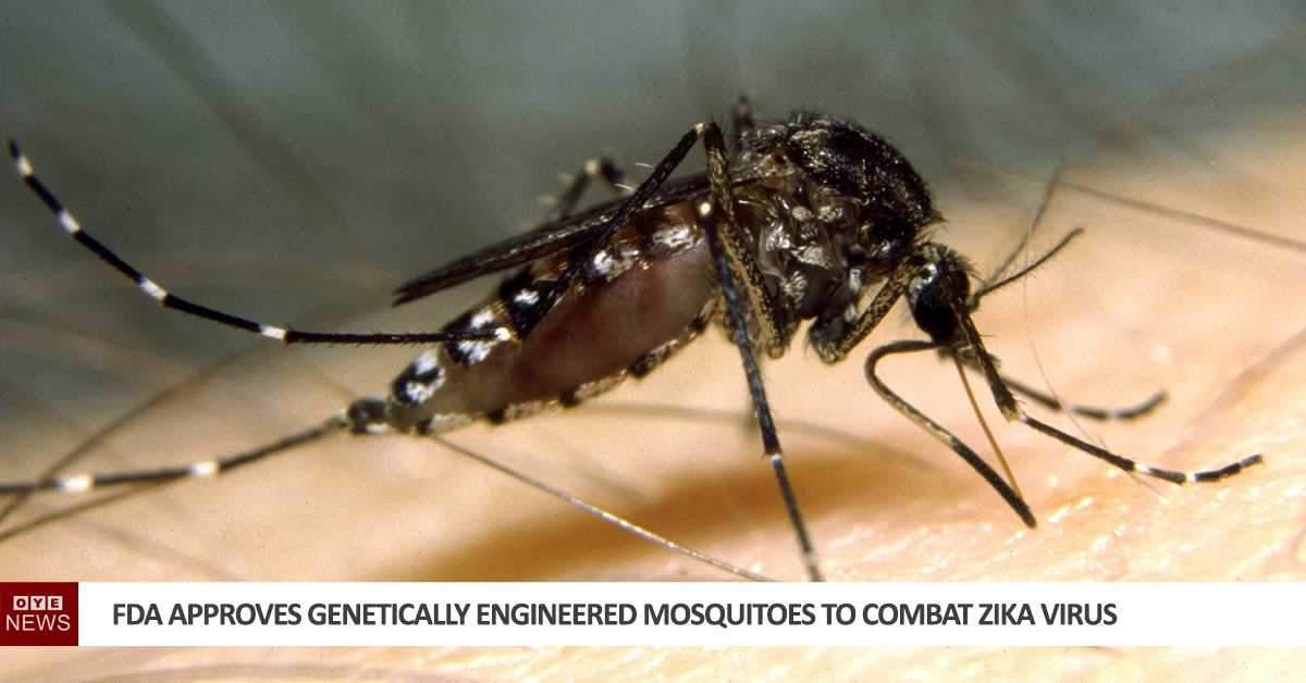 FDA approves genetically engineered mosquitoes to combat Zika virus