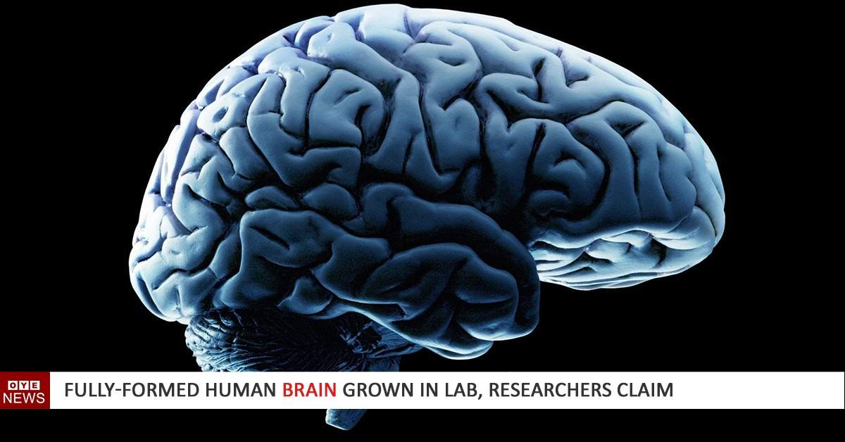 Fully-formed human brain grown in lab, researchers claim